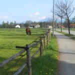 Prien am Chiemsee Pferde