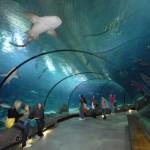 Zoo Und Ozeaneum - Rotterdam
