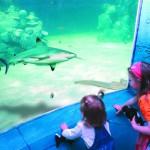 Sylt Aquarium - Innen